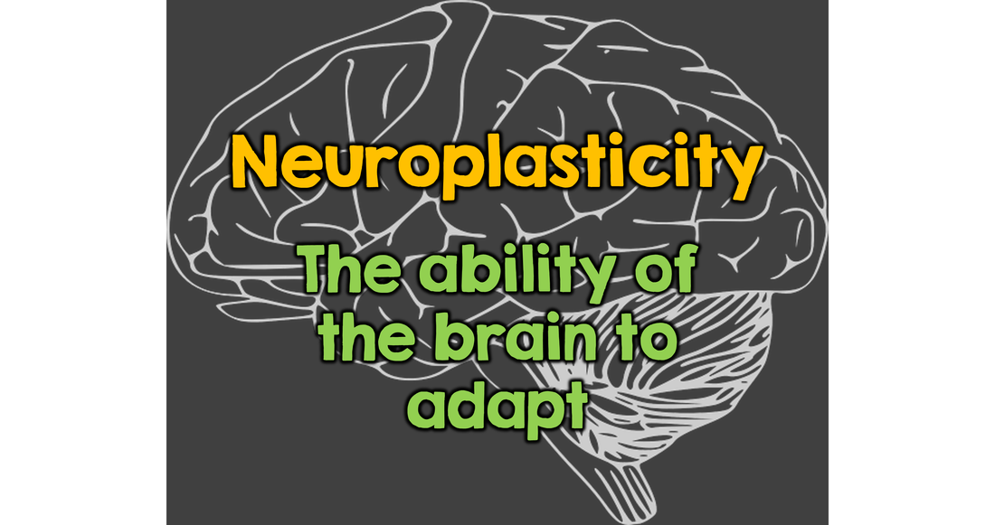 Mindsets in Your Classroom - Neuroplasticity